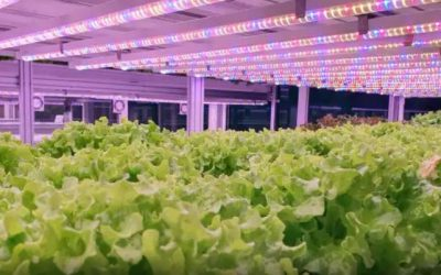 @Financial times, July 22 2020,  Produced by Alpha Grid  By 2050 an estimated 6.5bn people will be living in urban spaces. Vertical farming could play an increasing role in feeding them.  The farms use far less space, water and transport.  Video Clip; https://www.ft.com/video/9266753a-bd2f-4c91-af61-59f72adb3083